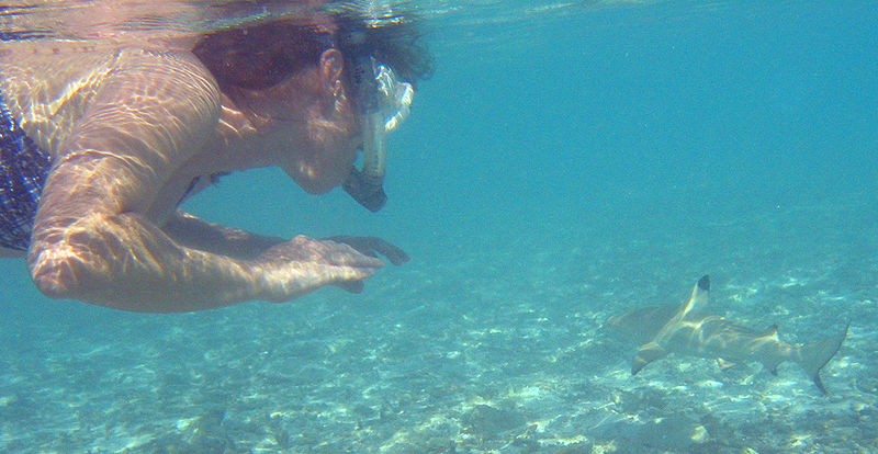 This blacktip reef shark is just not interested.