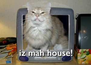 The lolcat, from photoshop and brain damage.
