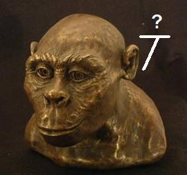 austrolopithecus_africanus_saywut