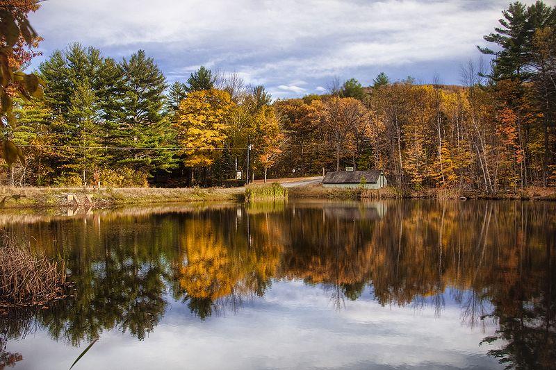The gorgeous telephone poles of the New England autumn.