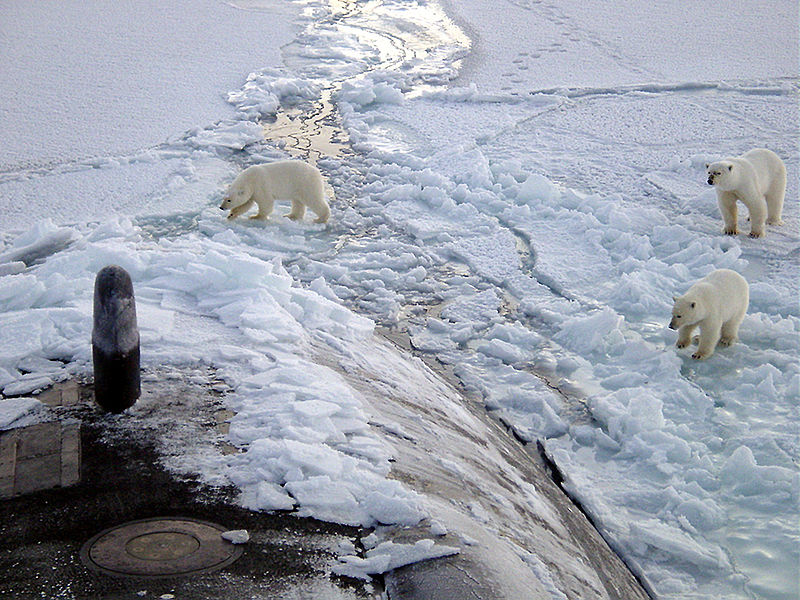 These bears can't imagine why someone would need so much metal to go swimming in subzero water.
